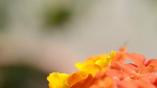 Thumbnail for Flower Macro