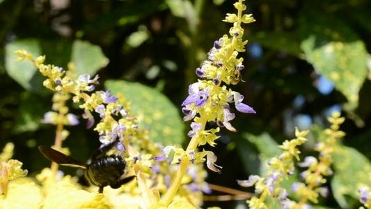 Thumbnail for Bumblebee 2