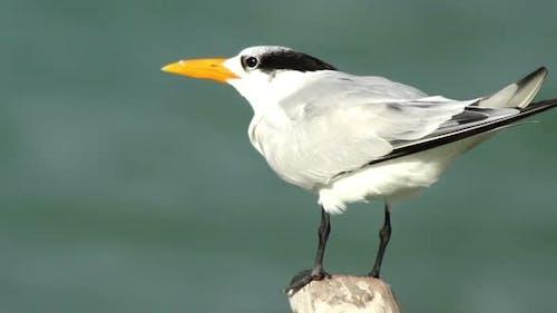 Vögel Tierwelt Mexiko