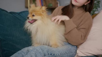 Pomeranian Dog is Sitting on the Girl's Legs