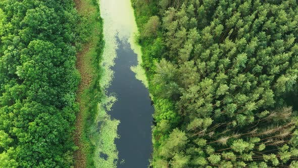 Aerial View Of Green Forest Landscape With Pine Woods And Small Bog Marsh Swamp Wetland