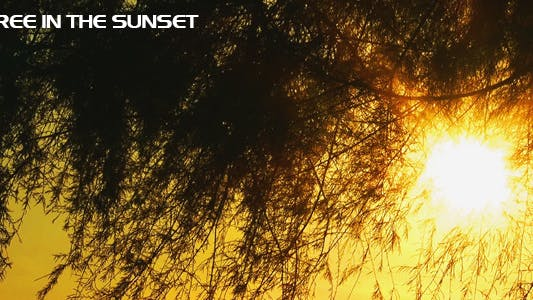 Thumbnail for The Tree and the Sun