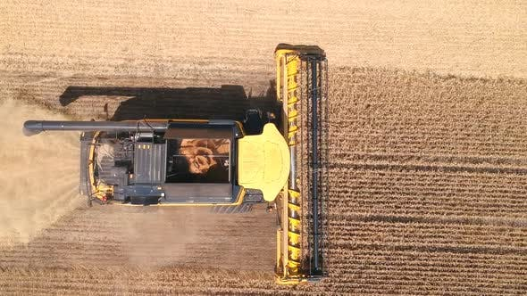 Thumbnail for Aerial Shot of Combine Gathering Rye or Wheat Crop. Flying Over Harvester Working in Farmland at