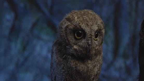 Thumbnail for Tiny Little Baby Owl with Fluffy Feathers Is Sitting on Branch,
