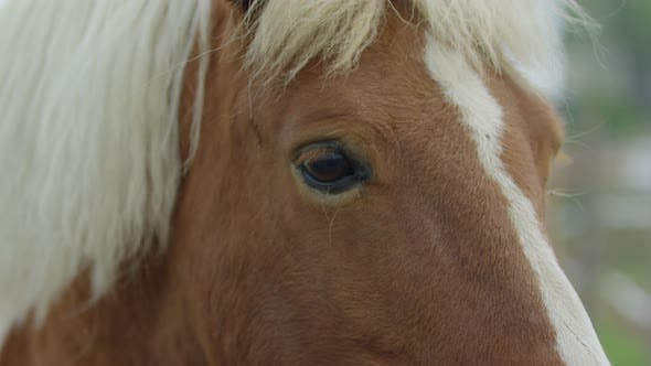 Close up of a brown horse with white mane