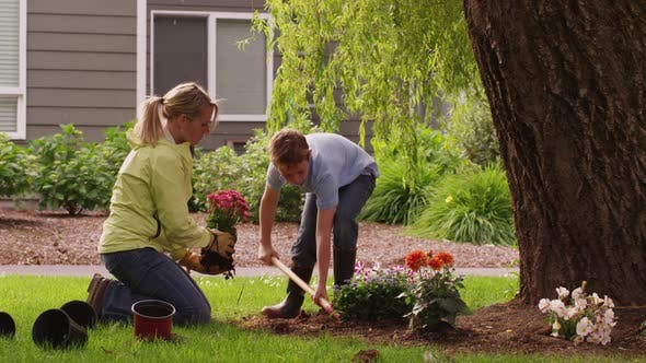 Thumbnail for Mother and son planting flowers in yard. Shot on RED EPIC