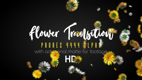Transition Fleur HD