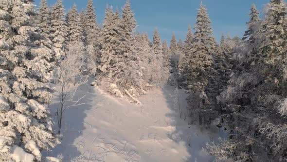 Thumbnail for Aerial View of a Frozen Forest with Snow Covered Trees at Winter