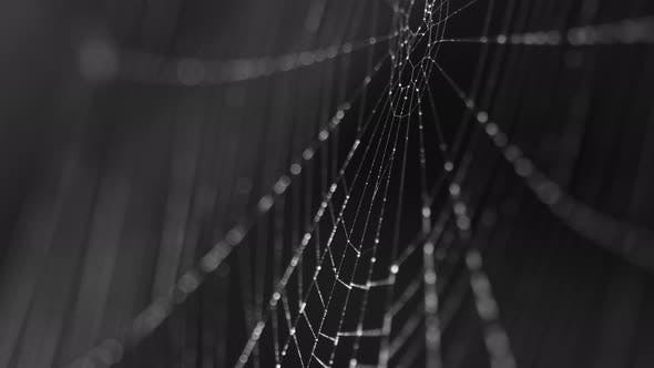 Beads of Moisture on Threads of Spider's Web