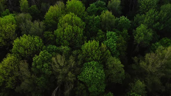 Thumbnail for Aerial Top View Forest, Texture of Forest View From Above.