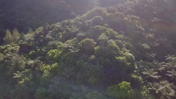 Dense rainforest aerial