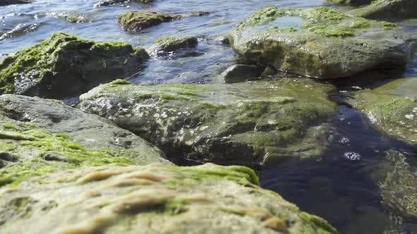 Thumbnail for Large Stones on the Shore in Seaweed