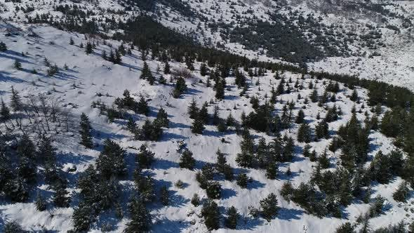 Cover Image for Aerial Forest In Snowy