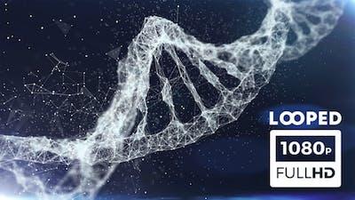 Plexus DNA