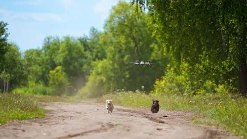 Entzückende Hunde laufen