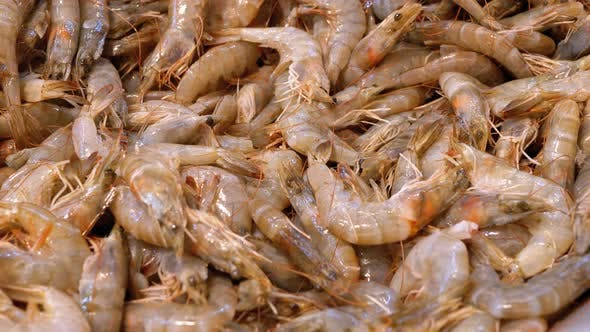 Thumbnail for Fresh Shrimps Are Sold in an Open Store Window on the Street Market. Egypt