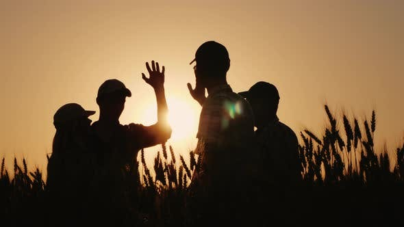 A Group of Young Farmers Makes the Mark High Five in a Field of Wheat