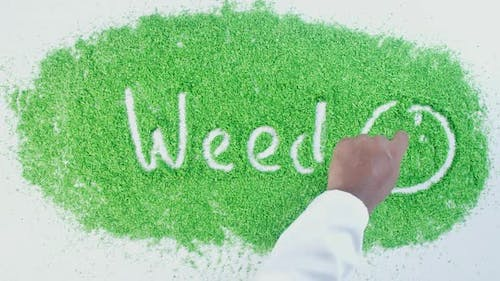 Hand Writes On Green Weed