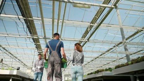 Farmers in a Greenhouse with Modern Technology
