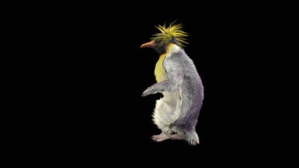 66 Penguin Dancing HD