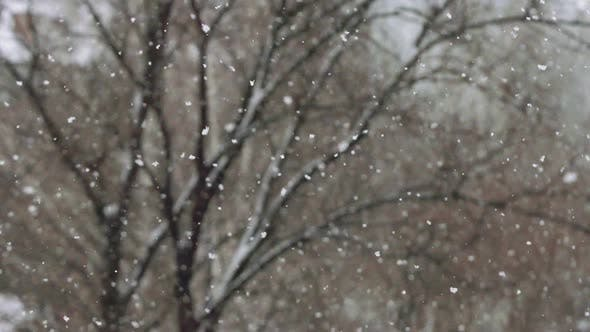 Thumbnail for Snowfall On A Tree Background In Winter