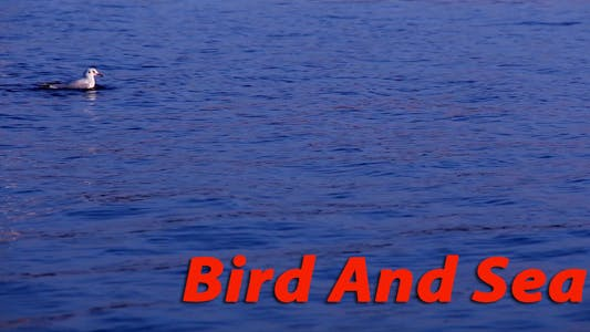 Thumbnail for Bird And Sea