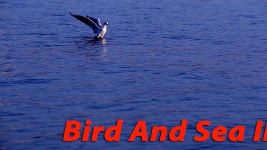 Thumbnail for Bird And Sea II