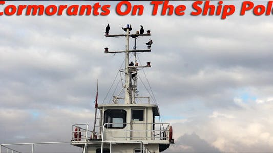 Thumbnail for Cormorants On The Ship Pole
