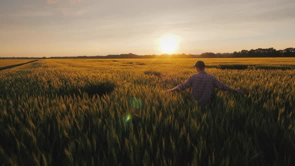 Cover Image for A Young Farmer Looks at the Spikelets of Wheat