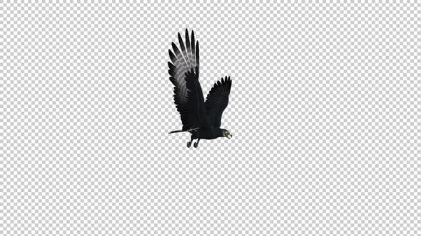 African Eagle - Gliding and Flying Loop - Side Angle