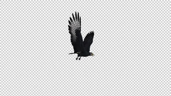 African Eagle - Gleit- und Fliegende Schleife - Side Angle