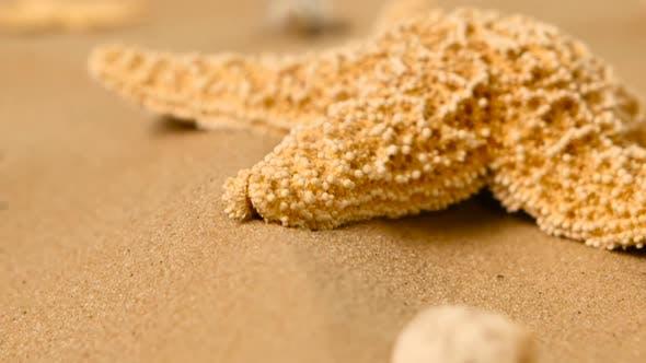 Starfishs on Sand, Rotation, Closeup