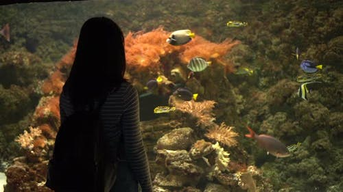 A Young Woman in the Aquarium Looks at the Marine Life