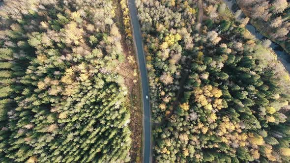 Thumbnail for Cars Drive Along Road Across Wild Forest with Curved River