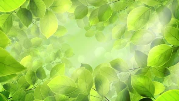 Thumbnail for Spring Leaves