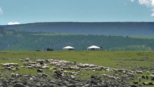 Mongolian Tents in the Background, While a Crowded Flock of Sheep Passes in the Foreground