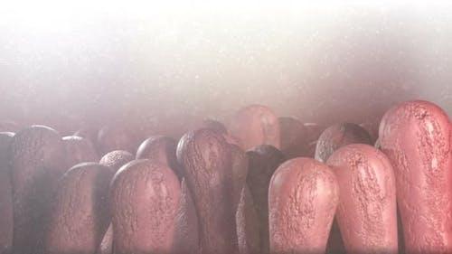 Intestinal Villi Abstract Background