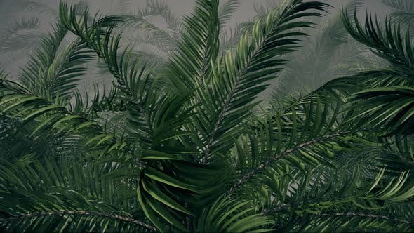 Thumbnail for Forest Of Tropic Palm Trees In Foggy Background