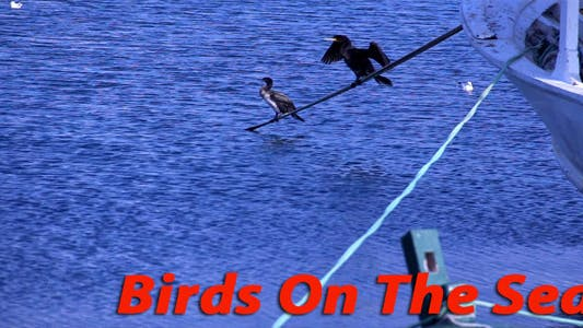 Thumbnail for Birds On The Sea