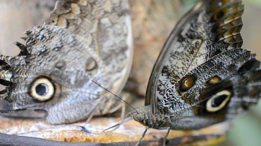 Thumbnail for Butterflies 7