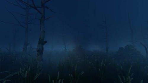 Jungle At Night 2k