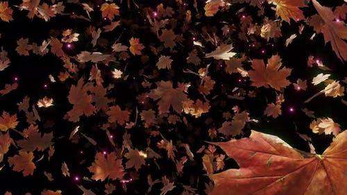 Maple Leaves Fall 04 4K
