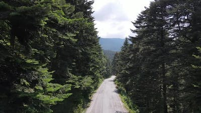 Road Green Forest