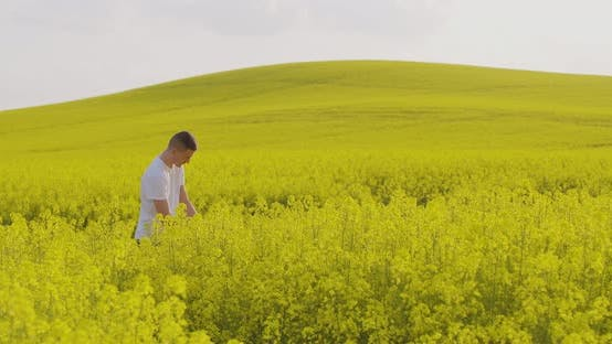 Thumbnail for Farmer Examining Oilseed Rape Field Agriculture