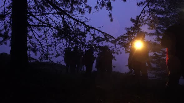 Thumbnail for Night Walk in the Forest