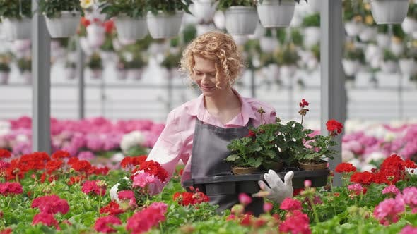 Beautiful Curly Woman Gardener is Holding a Pot with Beautiful Flowers