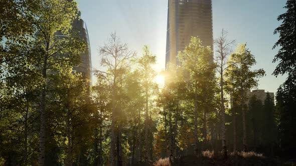 Thumbnail for Skyscrapes und der Forest Park bei Sonnenaufgang