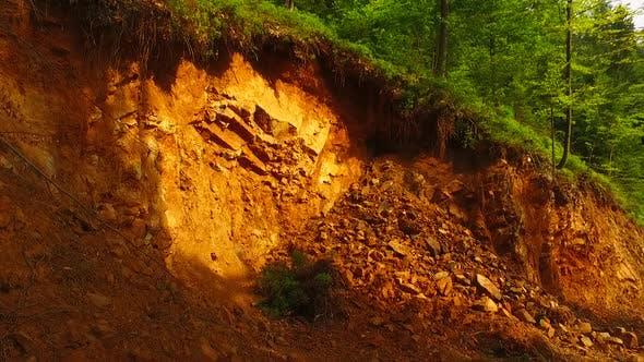 Dangerous Debris in Forest