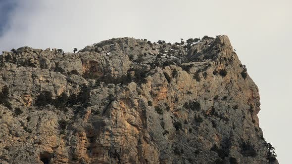 Cover Image for Sparse Trees Rocky Mountain Summit