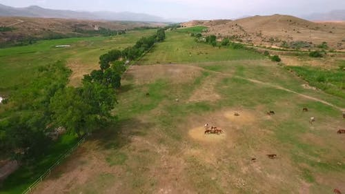 Aerial View Horses Grazing